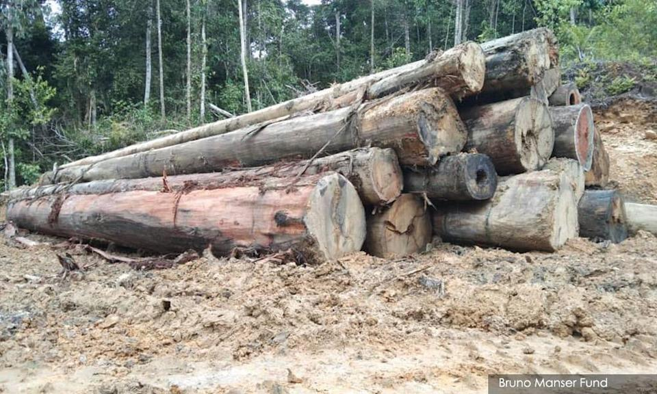 Timber logging is one of the major activities in Sarawak