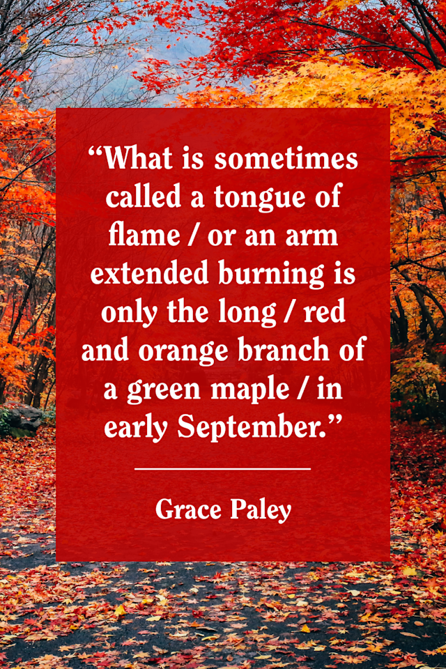 """<p>Paley <a href=""""https://www.poetryfoundation.org/poems/48222/autumn-56d22948808b5"""" target=""""_blank"""">wrote in her poem, """"Autumn:""""</a> """"What is sometimes called a  tongue of flame / or an arm extended  burning  is only the long / red and orange branch of   a green maple/in early September.""""    </p>"""