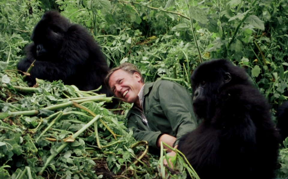 David Attenborough: A Life On Our Planet (Credit: Netflix/WWF/Silverback Films)