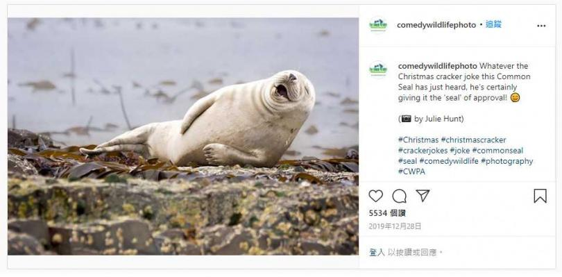 笑翻的海獅。(圖/Comedy Wildlife Photo IG )