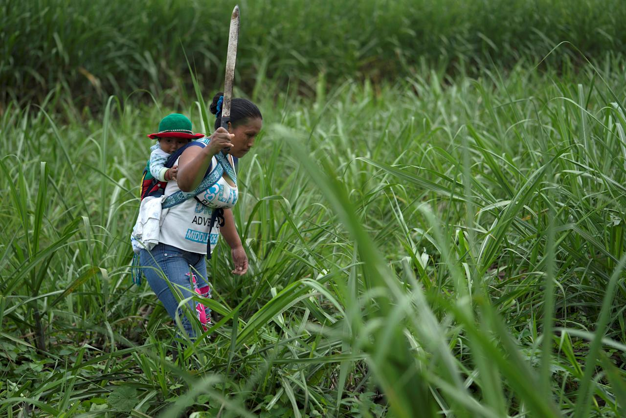 """A member of the Nasa indigenous tribe and """"Liberation of Mother Earth"""" movement cuts sugar cane on a field the tribe claims as their ancestral lands in Corinto, Colombia, May 11, 2017. Picture taken May 11, 2017. REUTERS/Federico Rios   TPX IMAGES OF THE DAY"""