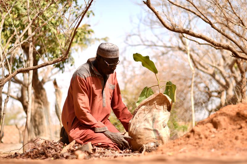 Sawadogo, a farmer, prepares to plant a tree in Ouahigouya