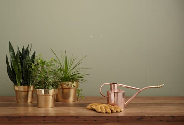 ways to celebrate Mother's Day - plants as gift