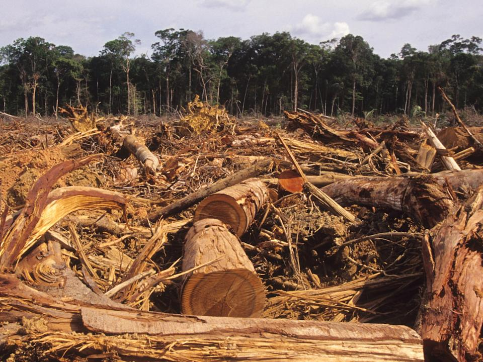 <p>Jair Bolsonaro has systematically reversed a decade of hard-won progress in slowing the destruction of the Amazon</p>