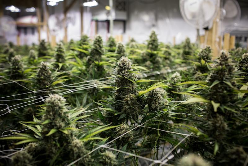 Aphria board rejects hostile takeover offer by Green Growth Brands