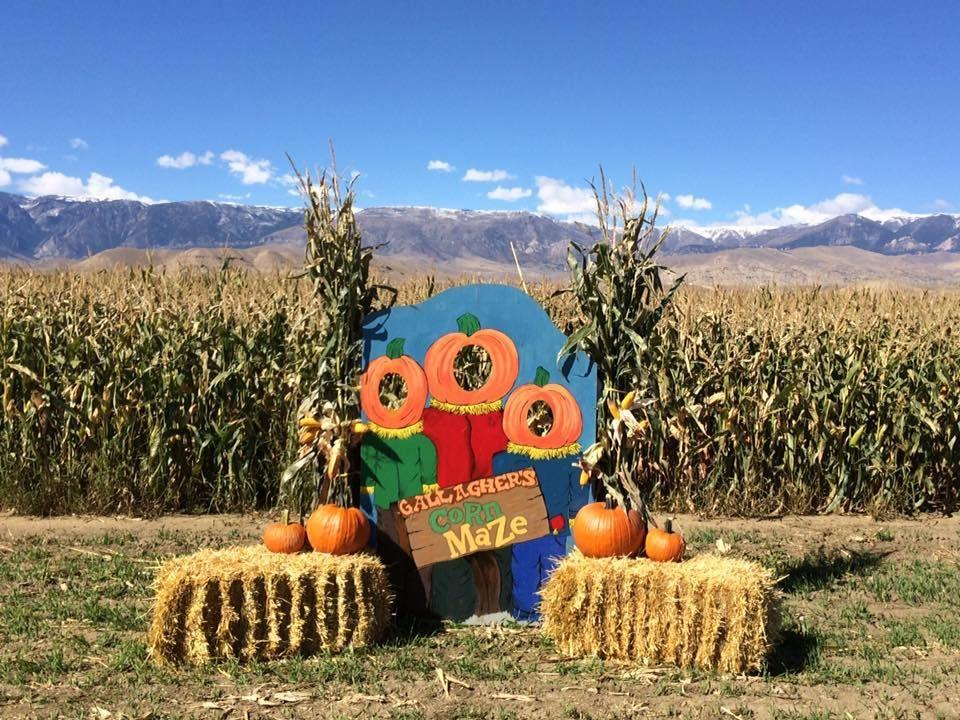 """<p><strong>Clark, Wyoming </strong></p><p>Pumpkins in every shape and size, along with a corn maze and hay bale slide, are all available at <a href=""""http://gallaghernaturalbeef.com/corn-maze-pumpkin-patch/"""" rel=""""nofollow noopener"""" target=""""_blank"""" data-ylk=""""slk:Gallagher Corn Maze and Pumpkin Patch"""" class=""""link rapid-noclick-resp""""><strong>Gallagher Corn Maze and Pumpkin Patch</strong></a>. While you're there, pick up their all natural beef and pork for your next comforting fall meal. Kids 2 and under are free, kids ages 3 and up are $6 and adults are $8. </p>"""