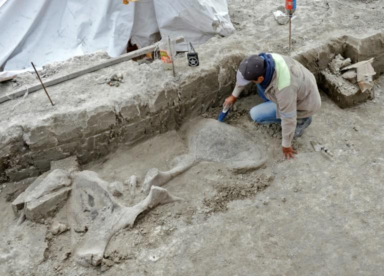 An expert works with mammoth bones discovered in Tultepec, Mexico, in this handout picture released by the country's National Institute of Anthropology (INAH) (AFP Photo/HO)