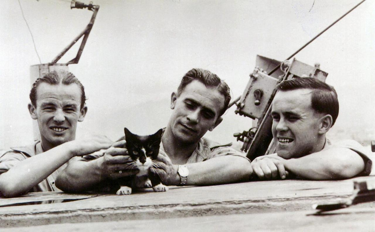 In this photo released Thursday Oct. 25, 2012 by The People's Dispensary for Sick Animals (PDSA) who are the awarding body responsible for the Dickin Medal for animal gallantry. Simon the ship's cat in this file photo with unidentified crew members. Simon cat was awarded the Dickin Medal for animal gallantry, posthumously in 1949 for his service aboard HMS Amethyst when the ship was shelled in the Yangtze Incident and Simon was injured. The latest animal to receive the Dickin Medal is announced Thursday Oct. 25, 2012, a bomb-sniffing army springer-spaniel dog named Theo, who died in Afghanistan on the day his handler was killed has been posthumously honored with the Dikin Medal, Britain's highest award for animal bravery, during a ceremony in London Thursday Oct. 25, 2012. Theo worked for five months in Afghanistan with Royal Army Veterinary Corps Lance Cpl. Liam Tasker, searching out roadside bombs, but Tasker was killed in a firefight with insurgents in Helmand Province in March 2011, and Theo the dog died hours later. (AP Photo)
