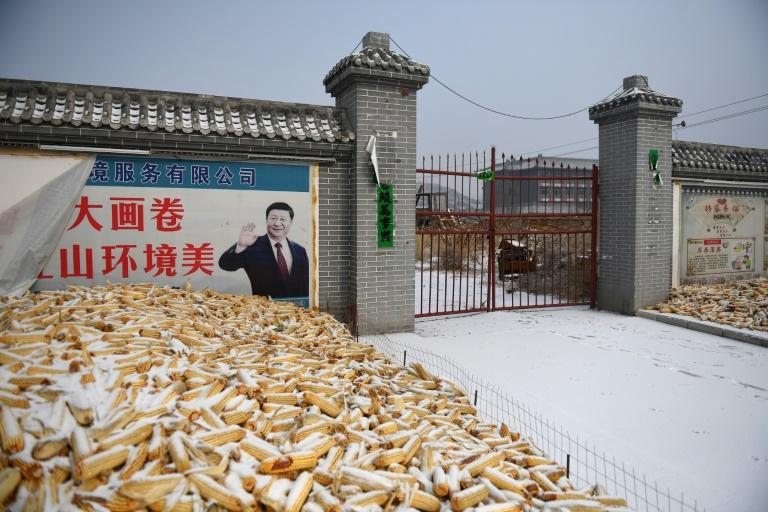 Corn dries in front of an image of China president Xi Jinping has enjoyed significant - if officially stoked - adulation