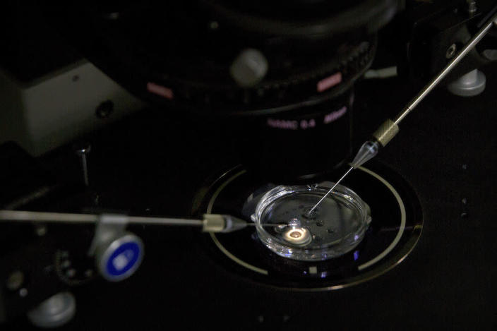 An embryo receives a small dose of Cas9 protein and PCSK9 sgRNA in a sperm injection microscope in a laboratory in Shenzhen in southern China's Guangdong province (Picture: AP)