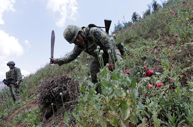 <p>A soldier uses his machete to chop poppy plants during a military operation in the municipality of Coyuca de Catatlan in Mexico, Mexico, April 18, 2017. (Photo: Henry Romero/Reuters) </p>