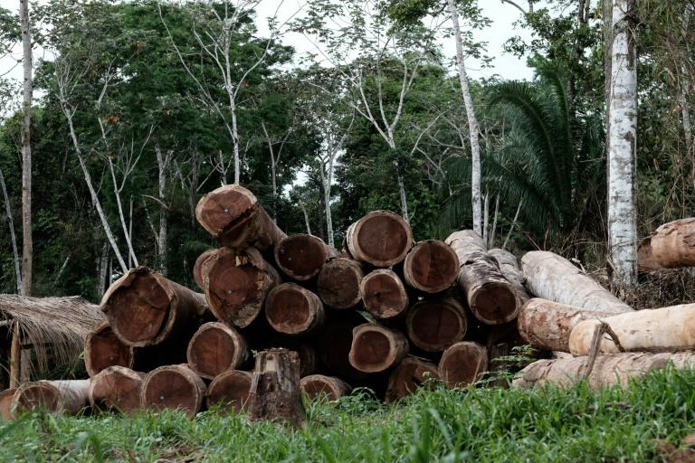 Logs in the forest in Xapuri, Acre State, in northwestern Brazil