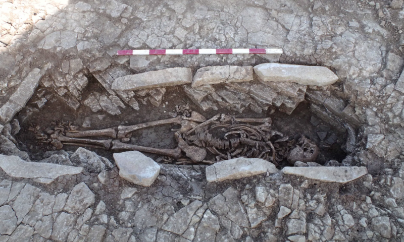 The remains were found at Somerton, near Glastonbury. (Wessex Archaeology)