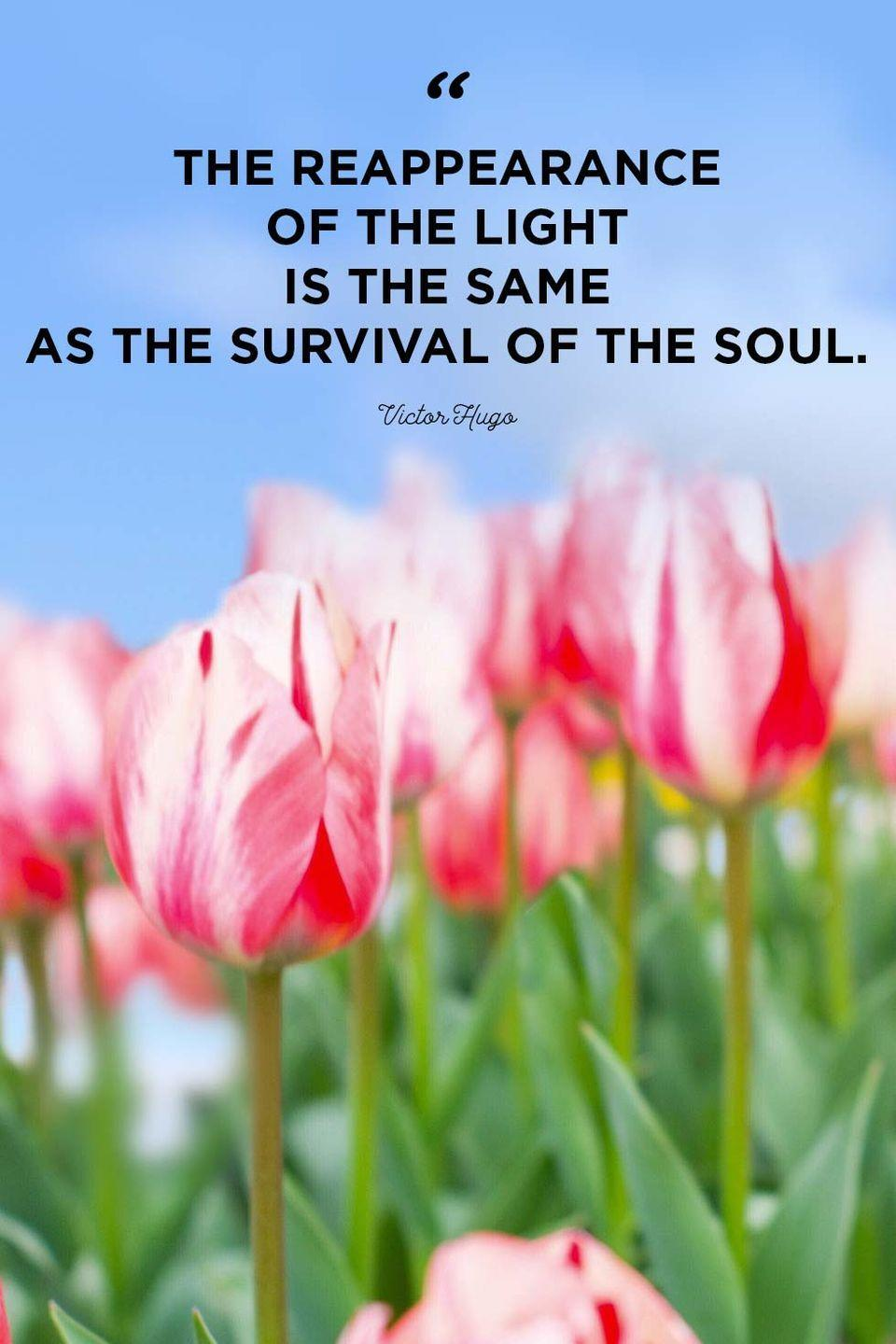 """<p>""""The reappearance of the light is the same as the survival of the soul.""""</p>"""
