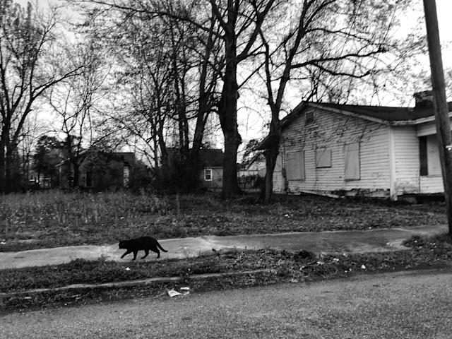 <p>A cat wanders past an abandoned house in Selma, Ala. (Photo: Holly Bailey/Yahoo News) </p>