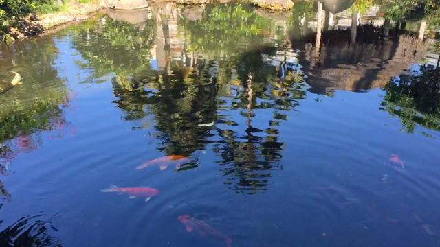 2-Year-Old Scottish Twins Drown In Koi Pond Behind Family Home