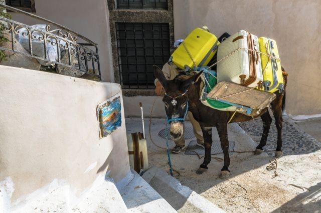 Overweight tourists banned from riding donkeys in Greece