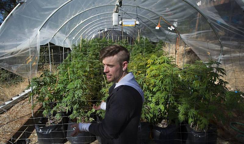Marijuana Legalization in Kentucky: New Bill Aims to Legalize Weed in 2017