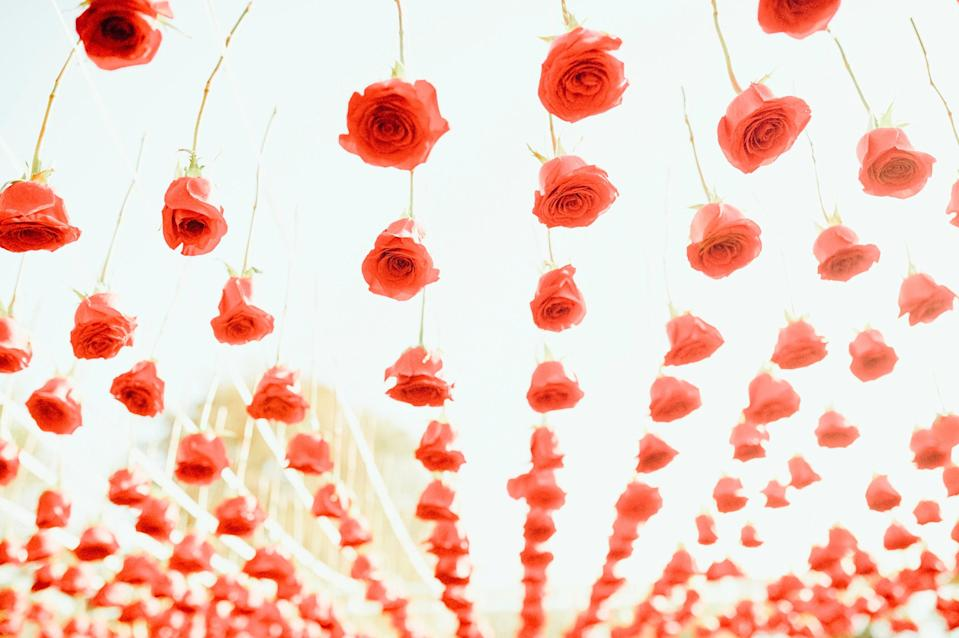 A close-up of the roses hanging from the top of our Chuppah. Raul Avila did a gorgeous job with all of the flowers.