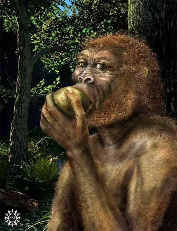 Erratic Environment May Be Key to Human Evolution