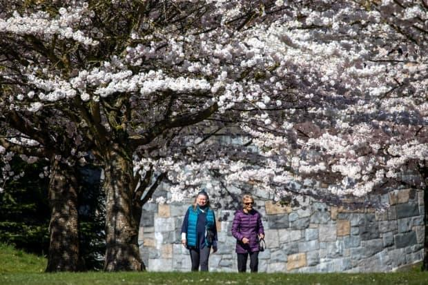 Two people walk along a sidewalk in Stanley Park near a Cherry Blossom tree in Vancouver, British Columbia on Monday, April 12, 2021.