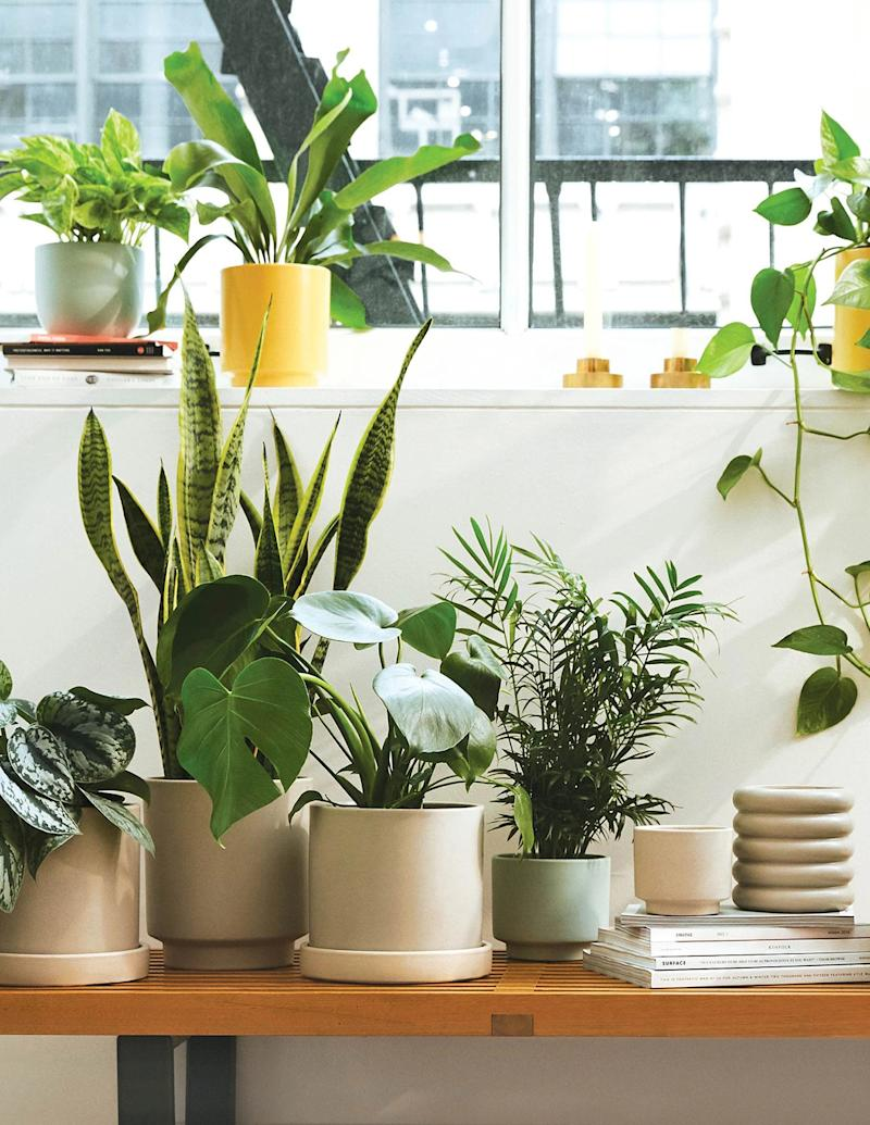 Collection of houseplants from The Sill near window