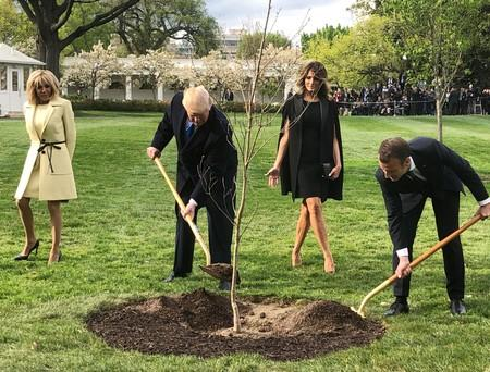 Macron Downplays Death of Oak 'Friendship Tree' He Planted With Trump