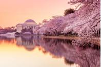 """<p>Washington, D.C., is much more than the heated political epicenter it's often painted to be. Some of the country's most extraordinary museums, monuments, and stunning row-style houses call the capital home. The ideal time to visit D.C. is toward the end of March, when the cherry blossoms reach their peak bloom and line the streets with pink flowers. Beyond the galleries, the city's dining scene is on the rise, with <a href=""""https://thedabney.com/"""" rel=""""nofollow noopener"""" target=""""_blank"""" data-ylk=""""slk:the Dabney"""" class=""""link rapid-noclick-resp"""">the Dabney</a> and <a href=""""https://www.imperfectodc.com/"""" rel=""""nofollow noopener"""" target=""""_blank"""" data-ylk=""""slk:Imperfecto"""" class=""""link rapid-noclick-resp"""">Imperfecto</a> bringing innovative dishes to the table. <br><br>Can't miss beautiful places: <a href=""""https://www.nps.gov/rocr/index.htm"""" rel=""""nofollow noopener"""" target=""""_blank"""" data-ylk=""""slk:Rock Creek Park"""" class=""""link rapid-noclick-resp"""">Rock Creek Park</a>, <a href=""""https://nmaahc.si.edu/"""" rel=""""nofollow noopener"""" target=""""_blank"""" data-ylk=""""slk:National Museum of African American History and Culture"""" class=""""link rapid-noclick-resp"""">National Museum of African American History and Culture</a>, and <a href=""""https://www.hayadams.com/"""" rel=""""nofollow noopener"""" target=""""_blank"""" data-ylk=""""slk:the Hay-Adams"""" class=""""link rapid-noclick-resp"""">the Hay-Adams</a></p>"""
