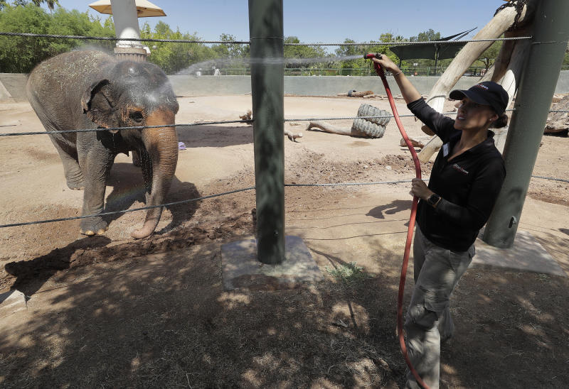 "Elephant keeper Monica Uhl cools off ""Reba"", an Asian elephant at the Phoenix Zoo, Tuesday, July 16, 2019, in Phoenix. Forecasters are predicting that the temperature on Tuesday could hit a scorching high of 115 degrees. The Phoenix Zoo use spraying, frozen treats and shaded area's to keep their animals cool. (AP Photo/Matt York)"