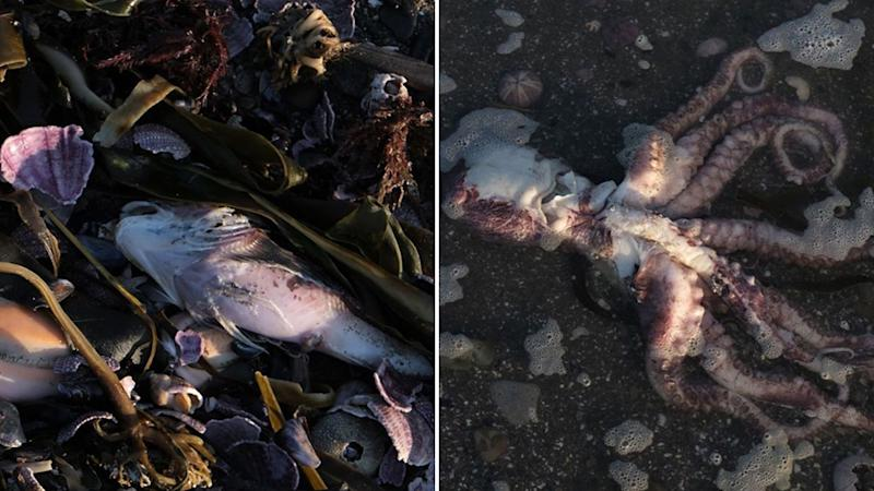 Images of dead sea creatures.