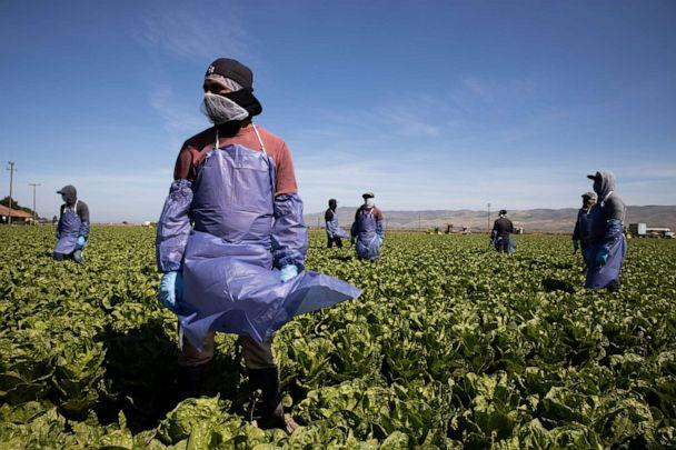 PHOTO: Farm laborers from Fresh Harvest working with an H-2A visa maintain a safe distance as a machine is moved on April 27, 2020 in Greenfield, California. (Brent Stirton/Getty Images)