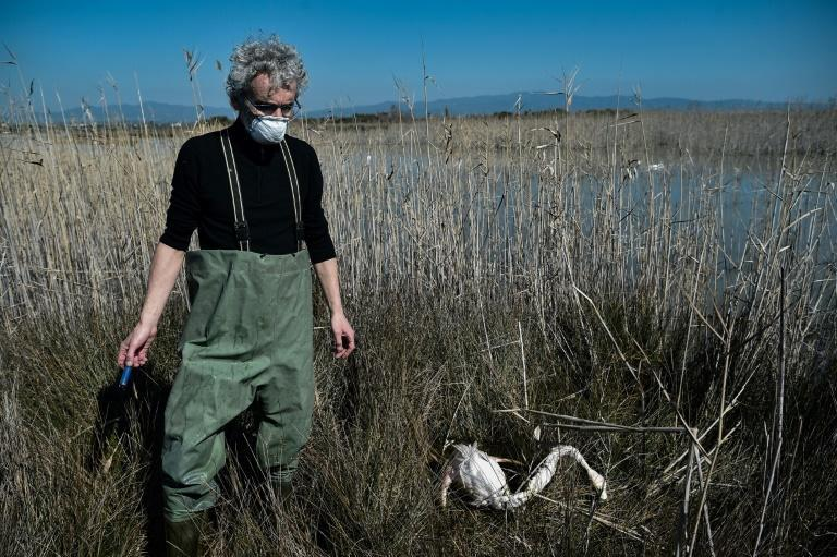 Environmentalist Stavros Kalpakis holds an empty shotgun shell next to a dead flamingo in the Agios Mamas lagoon