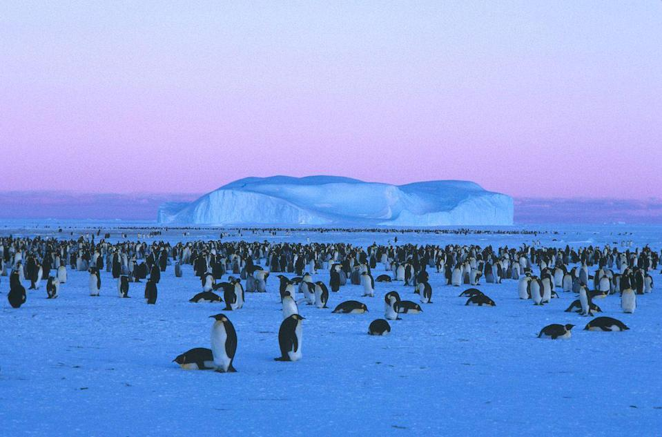 <p>Emperor penguin colony near Mawson, Antarctica // January 27, 2006</p>