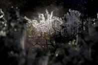 Icicles form on a bush in downtown Houston, Texas on February 15, 2021