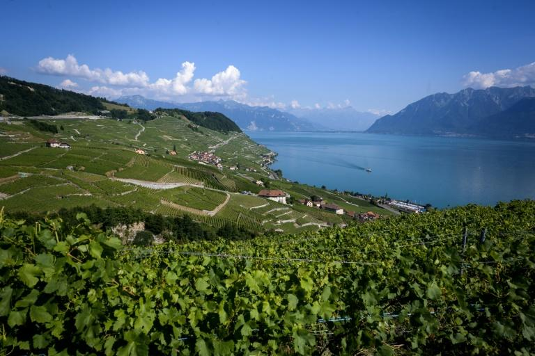 Swiss wines may not currently be well-known outside of the country but a new export promotion strategy aims to change that (AFP Photo/FABRICE COFFRINI)
