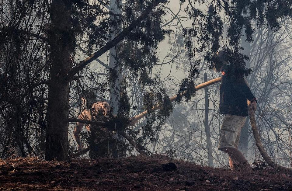 Israeli volunteers help extinguish a fire in the northern Israeli port city of Haifa on November 24, 2016 Hundreds of Israelis fled their homes on the outskirts of the country's third city Haifa with others trapped inside as firefighters struggled to control raging bushfires, officials said. (AFP Photo/Jack Guez)
