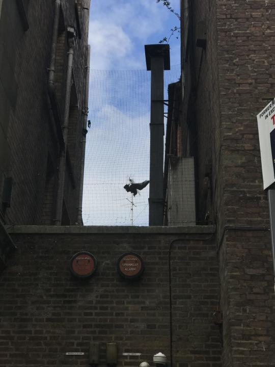 Firefighters rescued the trapped gull from Cardiff city centre where it was stuck between a Greggs, a bar and a gym (RSPCA/PA).