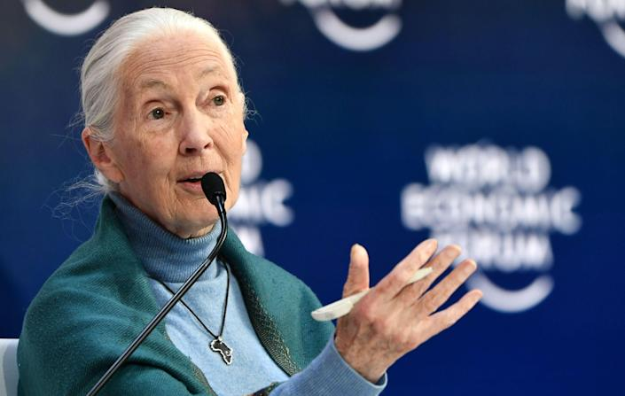 Jane Goodall releasing her new book in fall 2021.