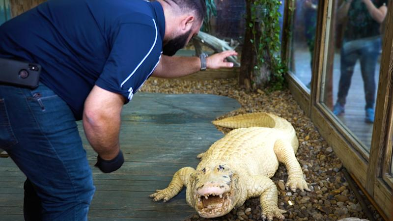 Brandon Fisher in his element with an extremely rare leucistic alligator. (Photo: Yahoo Finance)