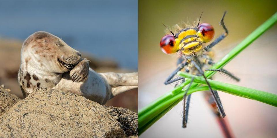 """<p>The 2021 Comedy Wildlife Photo Awards have just revealed the images shortlisted for their 2021 competition — and the impressive entries are certain to make you crack a smile. </p><p>Showcasing the biggest mix of animals seen in the competition to date, the 42 final images include a laughing vine snake from India, a trio of strutting Gentoo penguins on the <a href=""""https://www.countryliving.com/uk/travel-ideas/staycation-uk/a36909902/white-sand-beaches-uk/"""" rel=""""nofollow noopener"""" target=""""_blank"""" data-ylk=""""slk:beaches"""" class=""""link rapid-noclick-resp"""">beaches</a> of the Falkland Islands and an adorable giggling seal resting on the shore. </p><p>""""We were overwhelmed with the number and quality of entries we received this year, with well over 7,000 photos submitted from every corner of the globe,"""" Paul Joynson-Hicks MBE, Comedy Wildlife Photography Awards Co-Founder, says. </p><p>""""It was an amazing turnout, especially given the impact of the pandemic. The huge number of images we receive every year illustrates the appetite there is to engage with conservation and reminds us that wildlife truly is incredible and hilarious and, we must do all we can to protect it.""""</p><p>Want to vote for your favourite? Head over to their <a href=""""https://www.comedywildlifephoto.com/"""" rel=""""nofollow noopener"""" target=""""_blank"""" data-ylk=""""slk:website"""" class=""""link rapid-noclick-resp"""">website</a> to cast your vote for the best animal snap. Why not take a look at some of our top finalists below...</p>"""