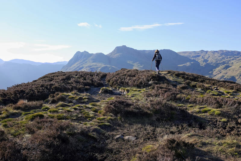 The view from Lingmoor Fell in the English Lake District shows the famous Langdale Pikes in the distance: Pike o' Stickle, Harrison Stickle and Pavey Ark. A woman hillwalker is visible on the skyline of the fell in the foreground.
