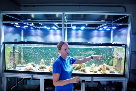Chief coral scientist Keri O'Neill gestures in front of a tank of Pillar coral (Dendrogyra cylindricus) just a few days before the animals would successfully spawn in an aquarium for the first time at a Florida Aquarium facility in Apollo Beach, Florida