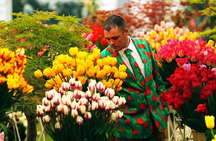 A man walks through the tulips on display at the Chelsea Flower Show in London, on May 23, 2016 (AFP Photo/Adrian Dennis)