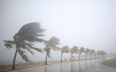 Palm trees sway in the wind prior to the arrival of the Hurricane Irma in Caibarien, Cuba - Credit: Alexandre Meheghini/Reuters
