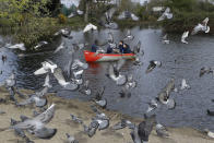 Pigeons fly as a family enjoy a boating lake in Finsbury Park as lockdown measures start to be relaxed in London, Friday, April 2, 2021. (AP Photo/Kirsty Wigglesworth)