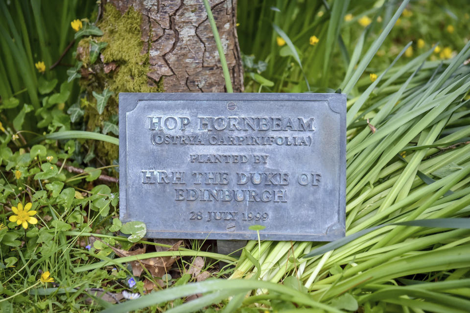 A plaque at the base of a tree planted by Prince Philip in 1999 at Britannia Royal Naval College in Dartmouth, Devon, where the he first met the Queen whilst training as a young naval cadet, England, Monday, April 12, 2021. Britain's Prince Philip, the irascible and tough-minded husband of Queen Elizabeth II who spent more than seven decades supporting his wife in a role that mostly defined his life, died on Friday. (Ben Birchall/PA via AP)