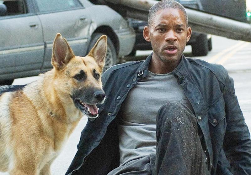 Will Smith and Sam the dog in I Am Legend (Publicity Picture)