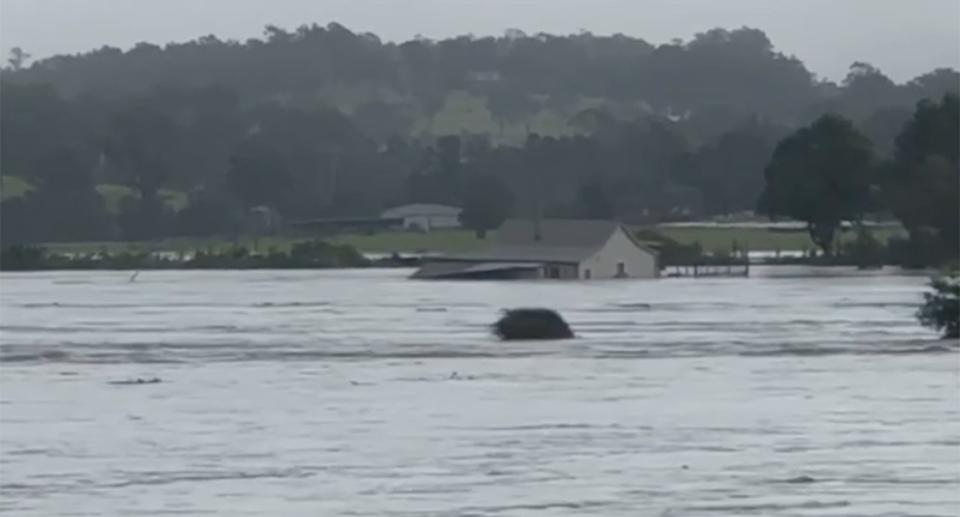 Pictured is a still from a video of a NSW Mid North Coast couple's home floating in floodwaters.