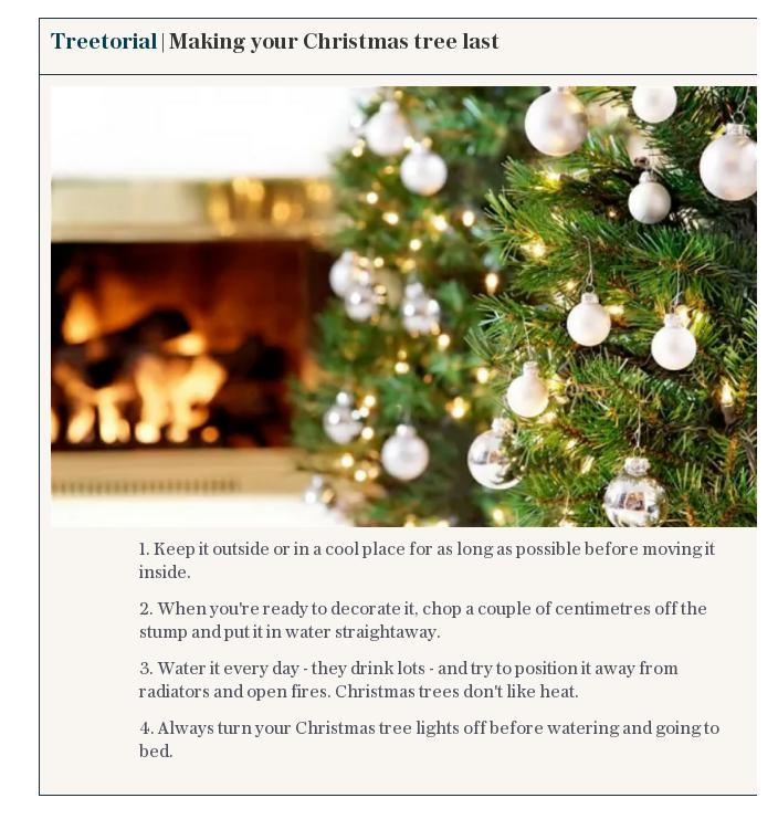 Treetorial | Making your Christmas tree last