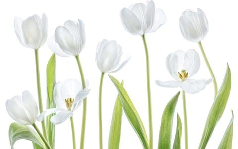 Mandy Disher's 'Simple Nature'